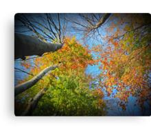 Autumn Variations  Canvas Print