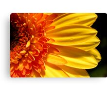 Sunflower Section Canvas Print