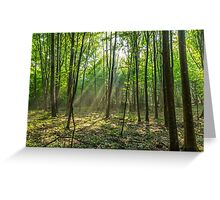 Rays of light in the forest Greeting Card