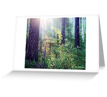 Sunny morning in the forest Greeting Card