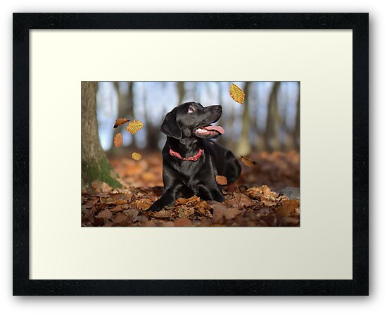 Just loving Autumn by Lyn Evans