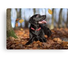 Just loving Autumn Canvas Print