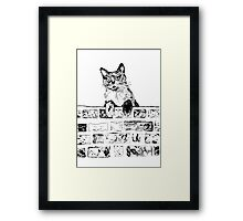 Cat on the Wall  Framed Print