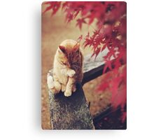 Cat in Nature Canvas Print