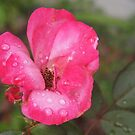 Rain and the Rose by Linda  Makiej Photography
