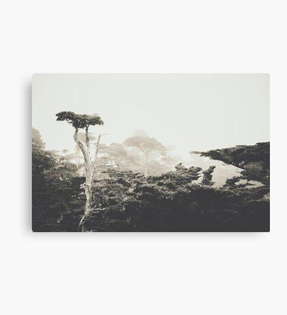 Cypresses Canvas Print