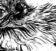 Pugsy the persian cat Sticker