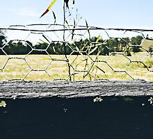 Through the Fence by Mihailo Evans