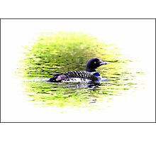 Lone Loon Vignette Photographic Print