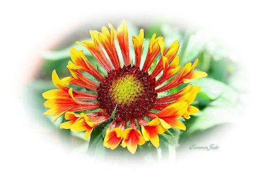 Gloriosa Daisy ~ Rudbeckia Hirta ~ Blanket Flower by SummerJade