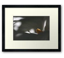 Yellow 9532 Framed Print