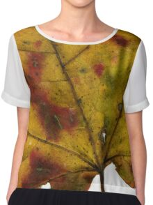 Maple Leaf in Fall Close Up Chiffon Top