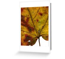 Maple Leaf in Fall Close Up Greeting Card