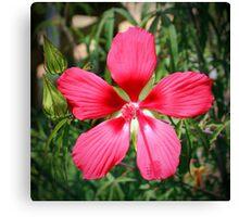 Scarlet Swamp Hibiscus  Canvas Print