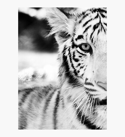 Eye of the White Tiger Photographic Print