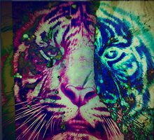 Tiger_8598 by AnkhaDesh