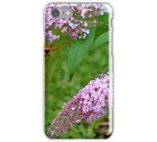 Hummingbird Moth on Butterfly Bush iPhone Case/Skin