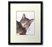 Sleeping Cat Framed Print
