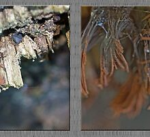 Chocolate Tube Slime Mold ~ Stemonitis splendens by MotherNature2