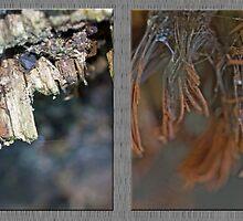 Chocolate Tube Slime Mold ~ Stemonitis splendens by MotherNature2