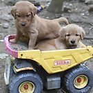 Lilly & Ramses Tonka Truck by goldnzrule