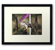 Guts are Good! Framed Print