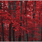 The Red Forest by emperorwish