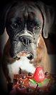 Sigh ... Wish It Was Real.... Boxer Dogs Series by Evita