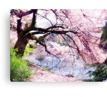Blossoming cherry tree touching water art photo print Canvas Print