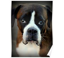 Remembering Arwen - Boxer Dogs Series Poster