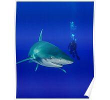Scuba Diver and Oceanic White Tip Shark Poster