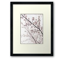 Blossoms on cherry tree branches closeup background art photo print Framed Print