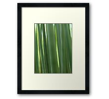 Bamboo forest abstract closeup art photo print Framed Print
