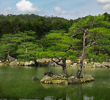 Pine trees at Japanese garden in Kyoto art photo print by ArtNudePhotos