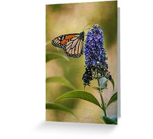 Monarch on butterfly bush Greeting Card