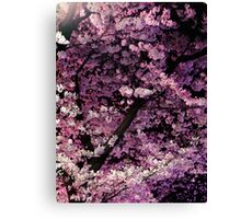Sakura cherry blossom at night art photo print Canvas Print