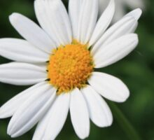 A White Daisy Sticker