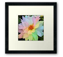 Colour Flower Framed Print