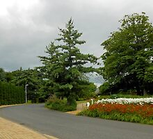 Tree Lined Avenue, Chorley, Lancashire  by BlueMoonRose