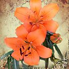 Lilies from my garden by Irene  Burdell