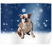 Cute Bulldog Dog with Blue Stars Snow flakes Poster