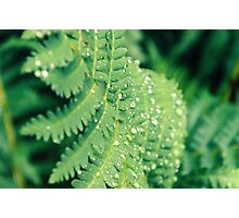 Fern growing in Mont Tremblant National Park Photographic Print