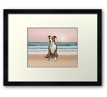 Cute Pitbull Dog Sitting on Beach with sunset Framed Print