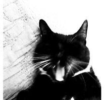 Fierce Tuxedo Cat by marientina