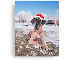 Cute Great Dane Dog Sitting In Snow Christmas Hat Canvas Print