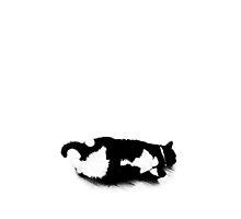 Napping Tuxedo Cat by marientina