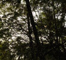 Sunny Tropical Rain - Refreshing Shower in Hawaii Sticker