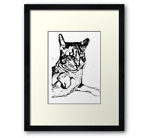Cat Paws Framed Print