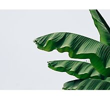 palm leaves Photographic Print