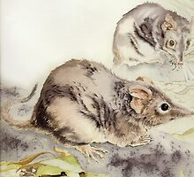 Antichinus flavipes - marsupial mouse by Carol McLean-Carr
